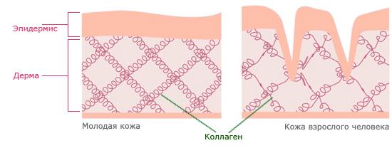 kollagen-v-kozhe