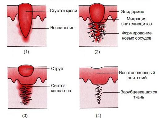 Левомеколь мазь гормональная или нет
