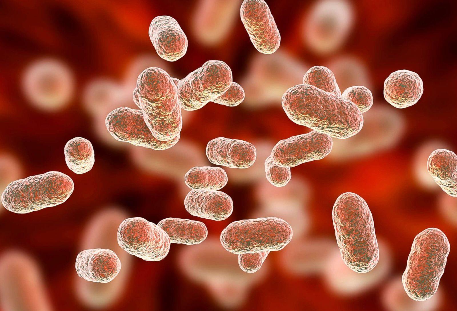 protivobakterialnyj