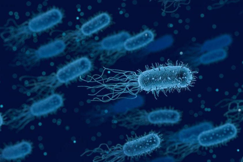 kletki-mikrobov